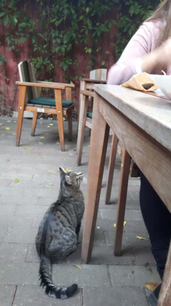 cat at oxford pub timisoara